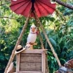 Rosita cockatoo animatronic on box in jungle environment