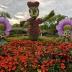 Daisy duck topiary at flower and garden festival