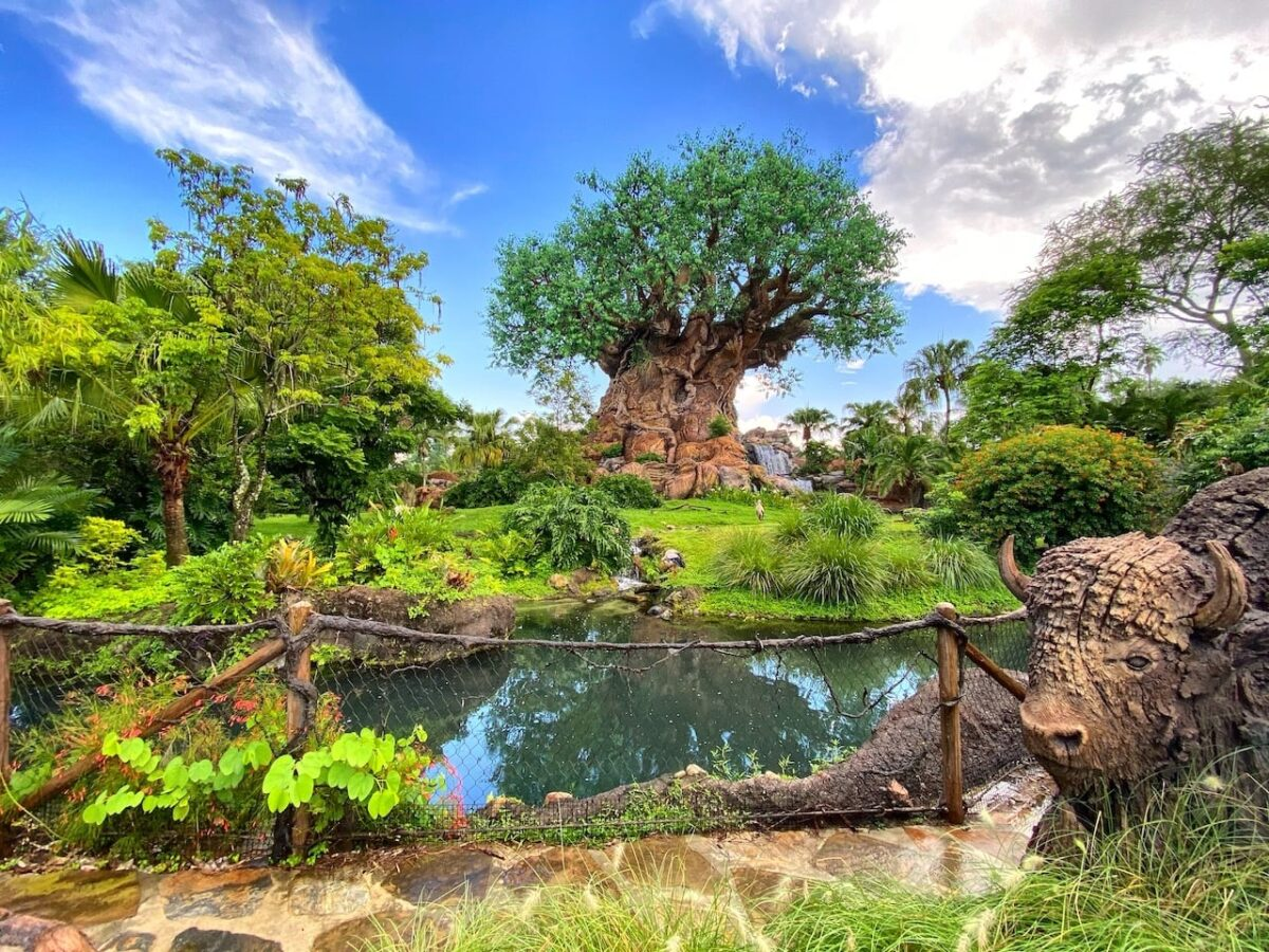 Disney World Reopening Journal Day 3 – Animal Kingdom