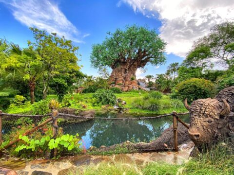 Animal Kingdom trees surrounded by water