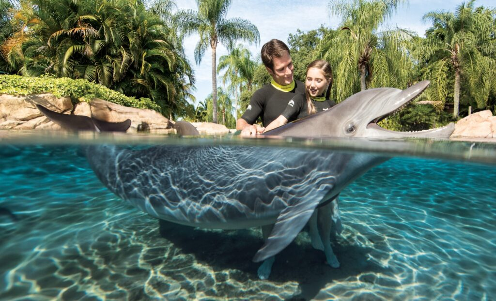 Father and daughter playing with dolphin