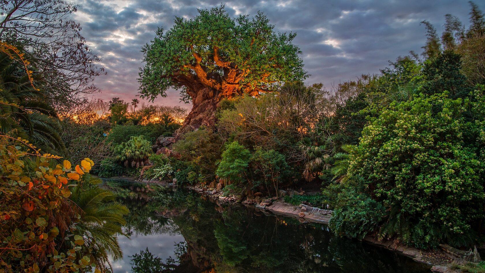 1 Day Disney World Tickets
