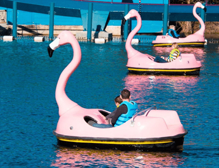 flamingo-paddle-boats