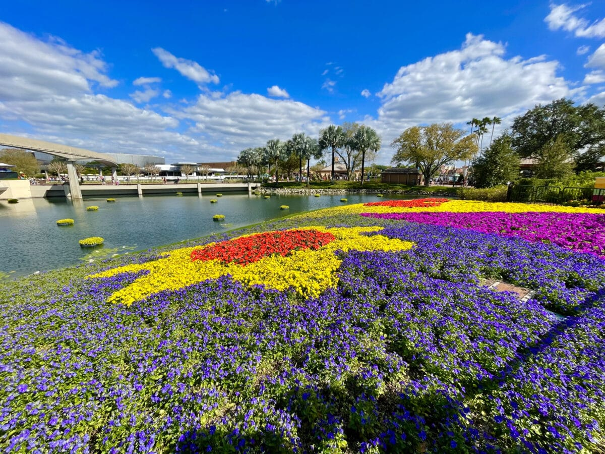 Colorful flowers in front of a lake