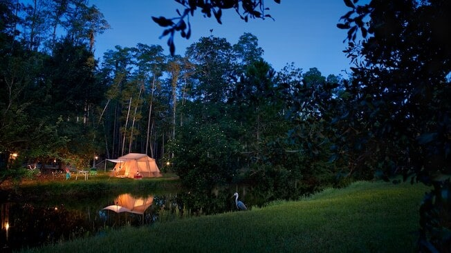 Outdoor campsite with tent