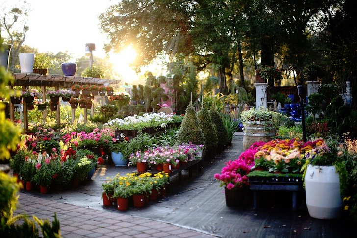 Garden full of flowers and trees