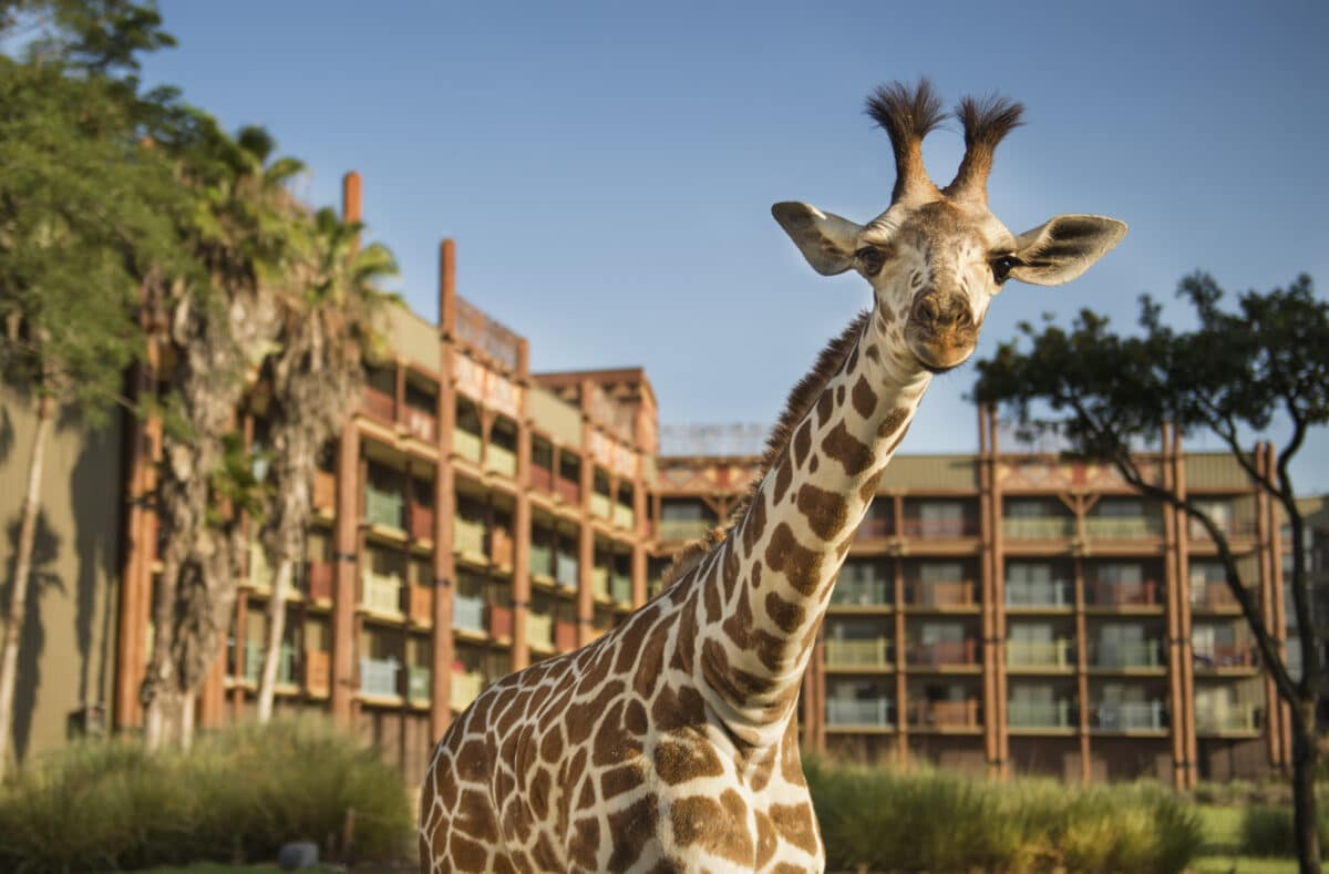 Giraffe in front of lodge building